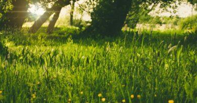 Sattes Grün für Ihr heimisches Paradies